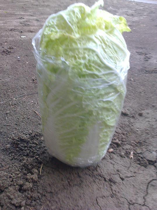 činska kapusta zelenina chudnutie