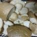 biely chleba
