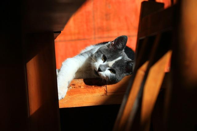 mačka_hurá_vikend