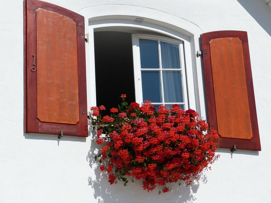 muškaty v okne pestovanie rady a tipy