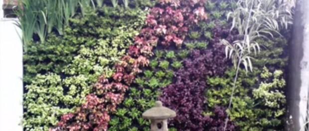 okrasna vertikalna zahrada